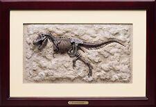 Tyrannosaurus Rex / T.rex / T-Rex Dinosaur Skeleton 3D Framed Art Sculpture