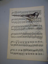 Vintage music sheet printed bird picture, wall art, antique, Pied Wagtail