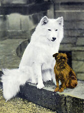 SAMOYED AND BRUSSELS GRIFFON CHARMING DOG GREETINGS NOTE CARD