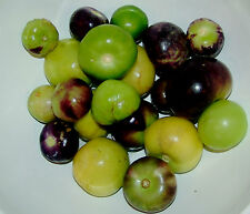 Tomatillo Mix! Perfect For Colorful Salsa! Combined S/H! SEE OUR STORE!