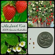 10+ RED GARDEN STRAWBERRY SEEDS (Fragaria x ananassa) Edible Fruit Sweet Garden