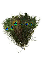 Natural Peacock Feathers 10-12 inches Long (40 pieces per pack)