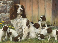 Nigel Hemming DAD'S ARMY Springer Spaniels, Mother Dogs Art Litter Puppies Pups