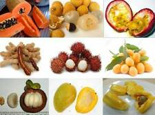 Mix of 50 tropical fruit tree/plant seeds from Asia rambutan/durian/mango/papaya