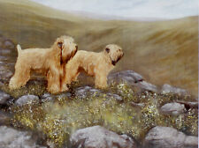 """SOFT COATED WHEATEN TERRIER SCWT DOG ART LIMITED EDITION PRINT - """"The Valley"""""""