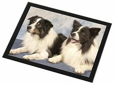 Border Collies Black Rim Glass Placemat Animal Table Gift, AD-CO2GP