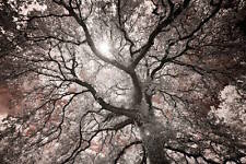 Michael Hudson Ethereal Tree Photograph Forest Nature Print Poster 19x13
