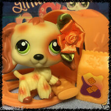 Littlest Pet Shop No # Number Puzzle Cocker Spaniel Dog Red Tan w/ Accessories