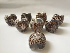 Cowrie Shell Carved Shaped Napkin Rings Holders x 8 Etched Flower Design Boxed