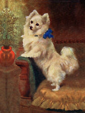 POMERANIAN CHARMING DOG GREETINGS NOTE CARD CUTE WHITE DOG STANDS ON CHAIR