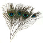 Real Natural Peacock Tail Eye Feathers 10-12 Inches 200pcs 100pcs 50pcs 30 10pcs
