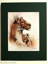 LION AND CUB PICTURE  MATTED PRINT 11X14