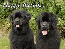 Newfoundland Dog Design A6 Textured Birthday Card BDNEWFOUNDLAND-5 by paws2print