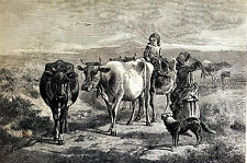 Morning on Moors ROUNDING up OXEN CHILDREN MOTHER DOG 1875 WESTERN Print Matted
