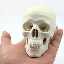 Teaching Mini Skull Human Anatomical Anatomy Head Medical Model Convenient PC