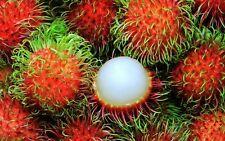 10 Fresh tropical exótica rambutan Árbol/Planta/Fruta Semillas de Asia