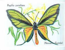 CARD 60s PAPILLON INSECTE BUTTERFLY LEPIDOPTERE PAPILIO PARADISEA Ornithoptera