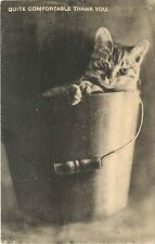 c1907 Lithograph Postcard, Cat Sits in Bucket, Quite Comfortable Thank You.