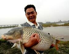 bait additives carp drug classic carp bait 32% High Protein (Buy ten get two)
