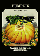 REPRINT PICTURE of card seed co PUMPKIN KENTUCKY FIELD seed pack fredonia ny 5x7
