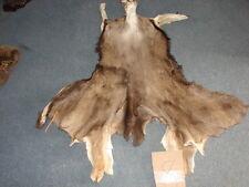MULE DEER CAPE, TAXIDERMY, tanned, antlers, hides, elk, antelope