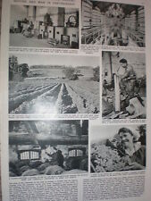 Photo article making champagne cognac in the Charente France 1957