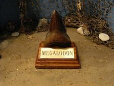 """MEGALODON SHARK TOOTH TEETH 4"""" FOSSIL DISPLAY STAND Tooth Not Included"""