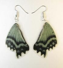 Pair of earrings from real butterfly wings of Alcides orontes