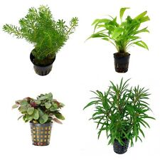 Special Assortment Nr 1 - Aquatic / Terrarium Plants 20 Pots