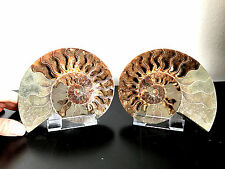 Fossil / Paire d'ammonite fossile sliced / sciée de Madagascar