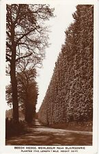 The Beech Hedge, MEIKLEOUR, Perthshire RP