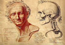 Framed Vintage Medical Print – The Human Face (Picture Poster Art Anatomy)