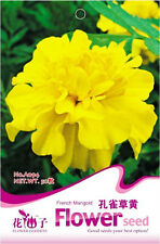 50 Original Package Seeds Yellow French Marigold Seeds Tagetes Patula A094