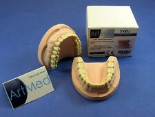 Plaster Dental Educational Training Jaw With Ivorine Teeth Model OM-200 ARTMED
