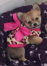 Chihuahua XS Size (Pug Puppy) Cosy Fleece Leopard top & Pink Bow Pet Dog Clothes