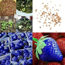 Nutritious Delicious 100pcs Blue Strawberry Seeds Organic Fruits Vegetables Seed