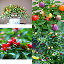 50PCS Garden Ornamental Hot Pepper Seed Organic Chilli Pepper Seeds IL