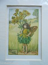 CICELY MARY BARKER - The Ragworth Fairy, Flower Fairies - Vintage Mounted Print