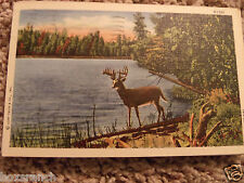 1958 POSTCARD DEER STAG BUCK STANDING BY LAKE TREES SCENIC