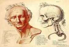 Jean Galbert Savage Set of 2  Anatomy Reproduction  Prints on A4 Canvas Paper