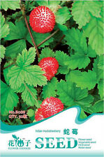 50 Original Pack Seeds Indian Mock Strawberry Seeds Duchesnea Organic B088