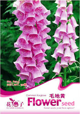 1 Pack 50 Common Foxglove Seeds Digitalis Purpurea Garden Flowers A124