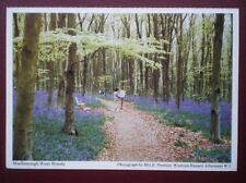 POSTCARD WILTSHIRE MARLBOROUGH WEST WOODS