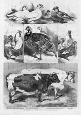 PIGEON, POULTRY AND CATTLE SHOW PIGEON, FOWL, TURKEY, DUCK, HAMBURGS, STEER, COW