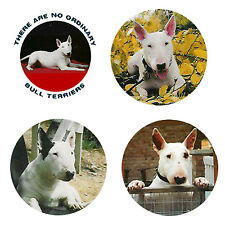 New listing Bull Terrier Magnets: 4 Cool Bullies for your Fridge or Collection-A Great Gift