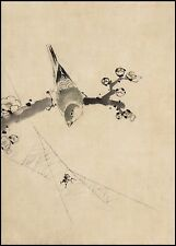 Japanese Drawing Reproduction: A Bird watching a spider - Fine Art Print