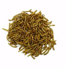 Kettle Moraine 5000 Live Mealworms Size Medium Guaranteed Delivery