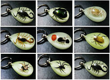 18pcs sexy natural mixed real insect teardrop glow style lots lovely keychain