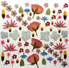 PRESSED DRIED FLOWERS FOR CRAFTS
