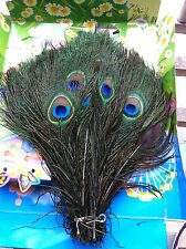 10pcs Natural Peacock Eye Feathers 10-12' For Wedding Decoration